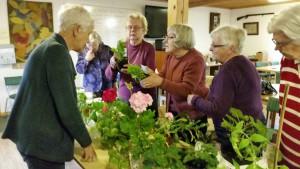 Innan auktionen började undersöktes växterna noga.